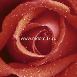 Фотообои Rose