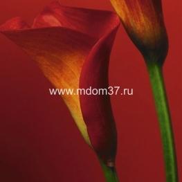 Фотообои Red Calla Lilies